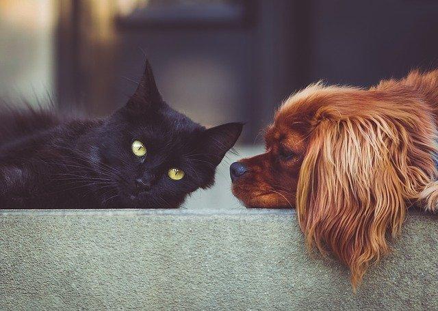 pelo de mascotas